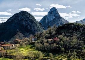Arbustos y montañas de la comarca