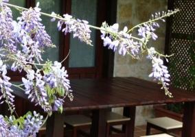 Balcón y flores