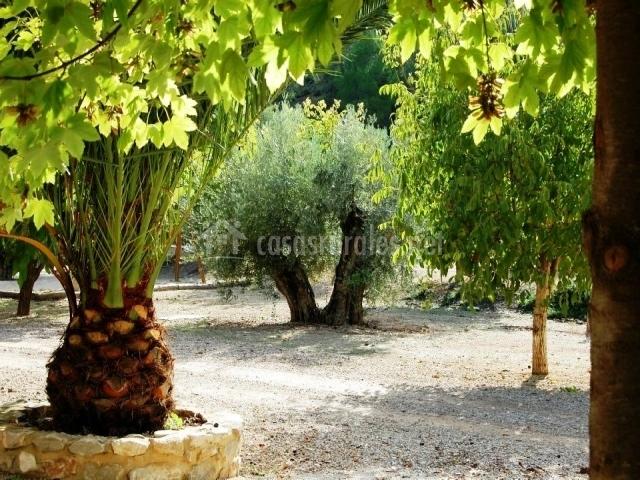 Jardín exterior del alojamiento palmeras y olivos