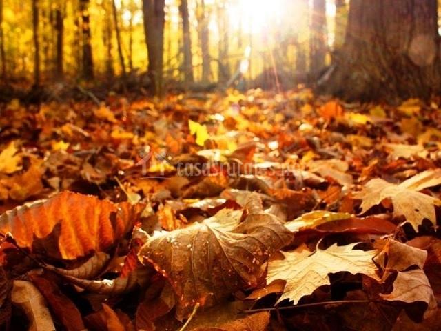 Campo en otoño