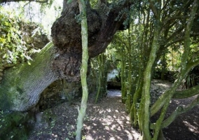 Los árboles de nuestros jardines