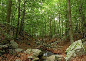 Parc Natural del Monsteny