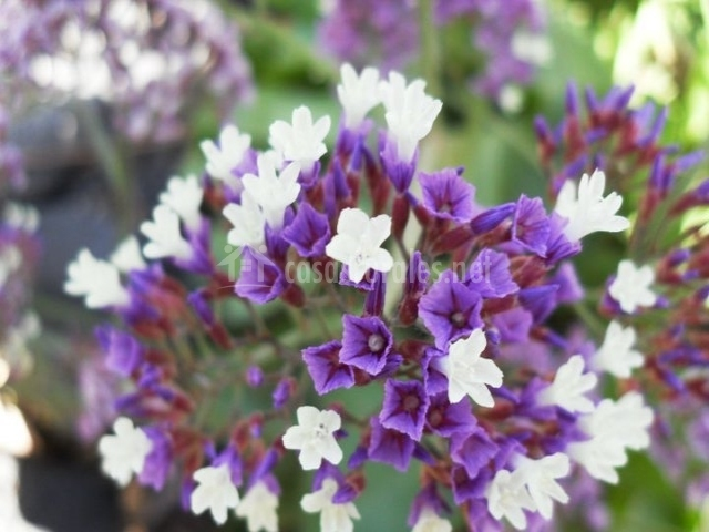 Flores de los jardines