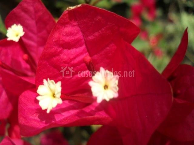 Flores rojas en los jardines