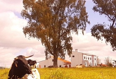 Casa Mayoral - Zafra, Badajoz