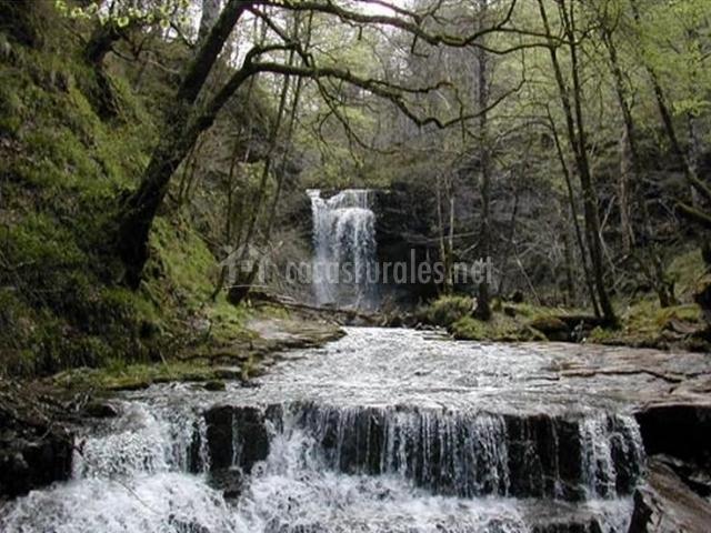 Zona natural con río