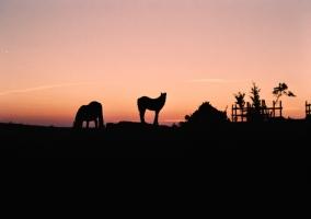 Naturaleza y vida en Bereza