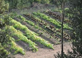 Huerta ecológica