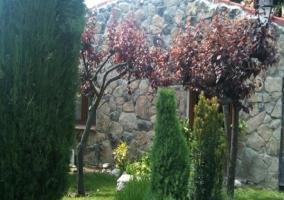 Vegetación en jardín