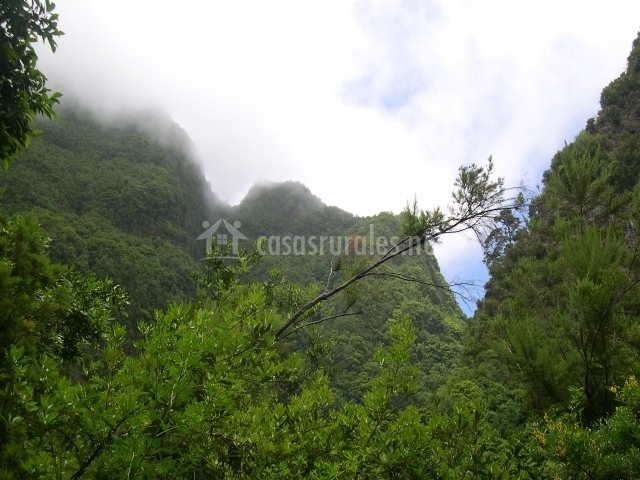 Bosque de La Palma