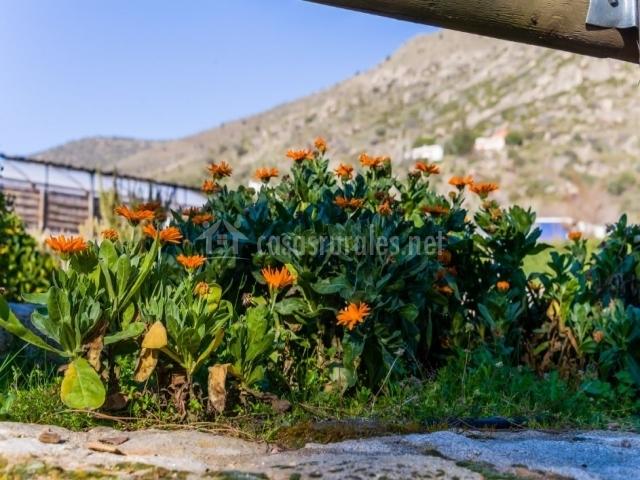 Vistas de los exteriores con flores