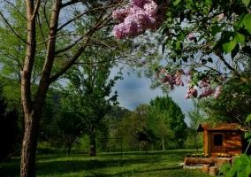 Árboles del jardín