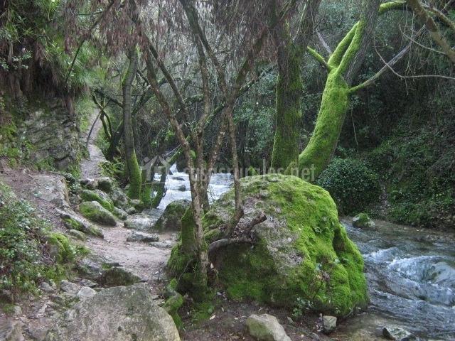 Casa la malva 1 apartamentos rurales en el bosque c diz - Casas rurales en el bosque cadiz baratas ...
