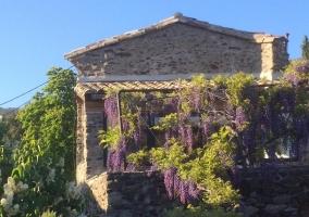 Hameau du Buisson- La Glycine
