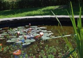 Estanque de agua con nenúfares