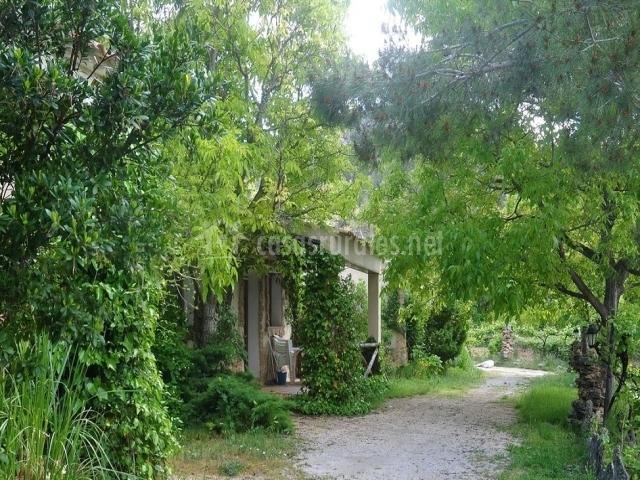Casas rodeadas de vegetación