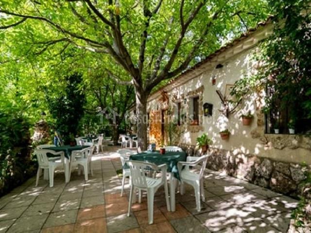 Terraza del restaurante rodeada de vegetación