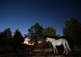 Hay caballos por la zona