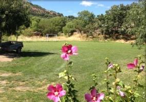 Jardín con flores rosas y campo de fútbol al fondo