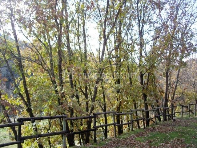 Camino y valla de madera