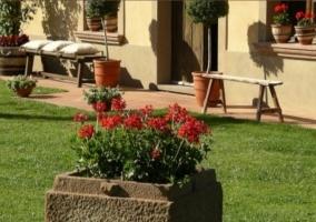 Flores rojas y banco