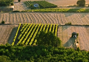 Campos de viñedo y labranza en La Rioja Alta