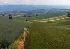 Tierras de cereales en Cuzcurrita