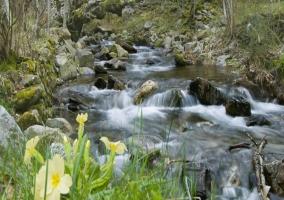 Río del entorno de Cuzcurrita