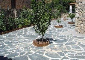 Árboles del jardín con suelo de piedra