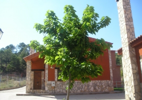 Árbol en la entrada