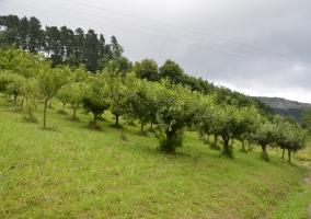 Campo árboles