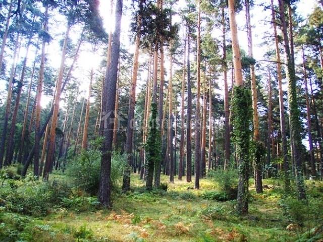 Bosque de la zona
