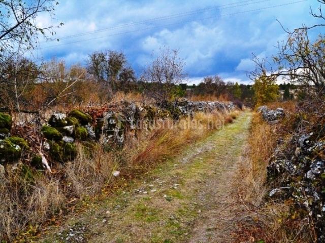 Camino rural de los alrededores