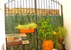 Patio exterior con plantas