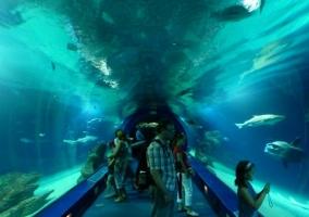 Visitantes del L´ OceanogrÀfic con delfines