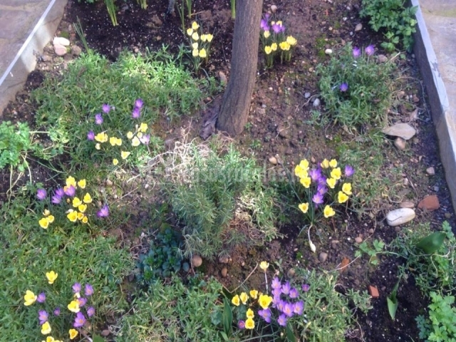 Flores del pequeño patio