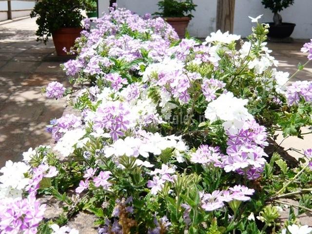 Flores en las zonas comunes del cortijo