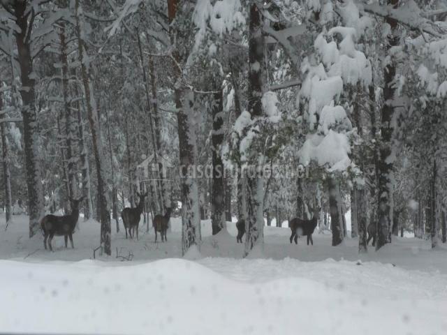 Campo nevado con ciervos junto a la Casa Rural