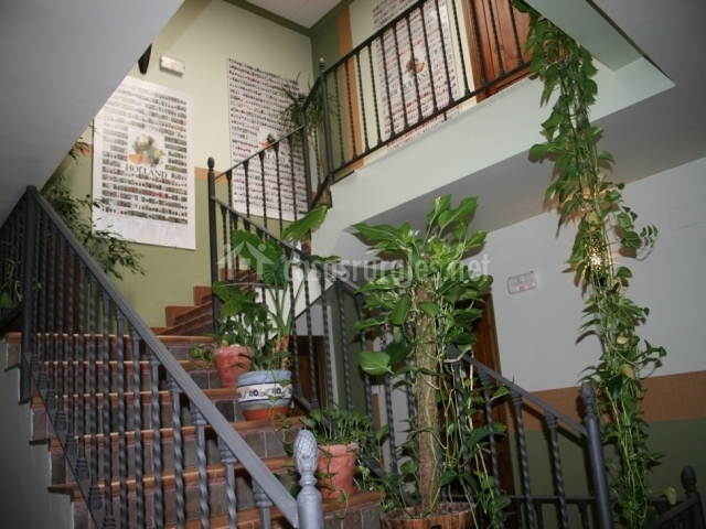 Escaleras con plantas