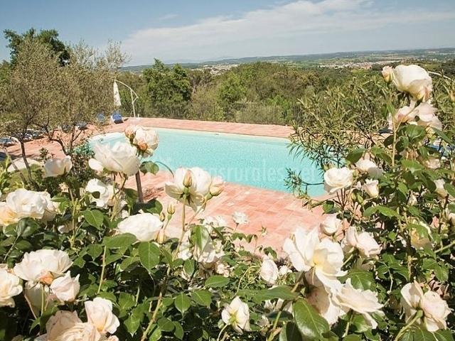Flores junto a la piscina