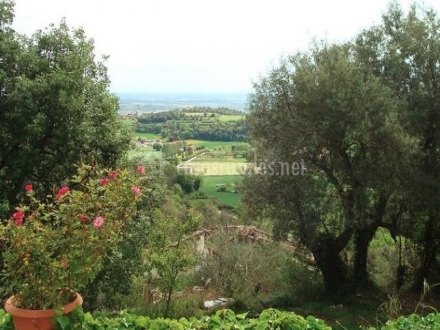 Vegetación y vistas