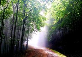 bosque exterior