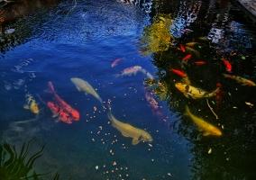 Estanque de peces