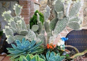 Cactus en los exteriores