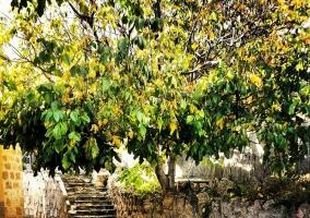 Alrededores con vegetación