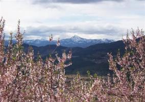El macizo de Peñagolosa nevado al fondo con almendros en un primer plano