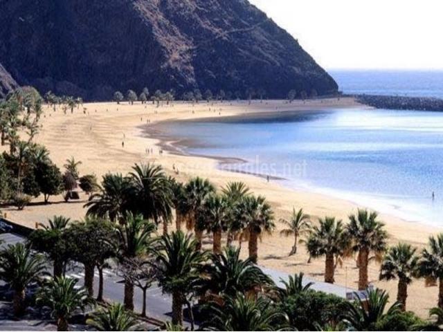 Zona natural de playas con palmeras