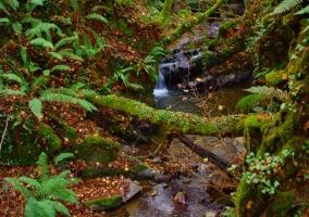 El entorno lleno de plantas y un río