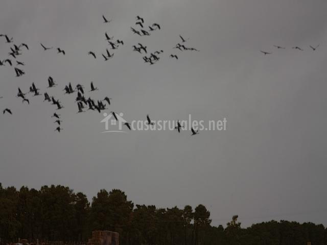 Avitamiento de aves en La Moraña