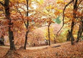 Castañar en otoño